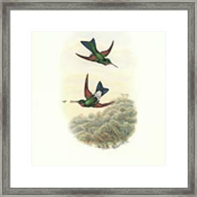 Rufous-webbed Brilliant Hummingbird Heliodoxa Branickii Framed Print by John and Elizabeth Gould