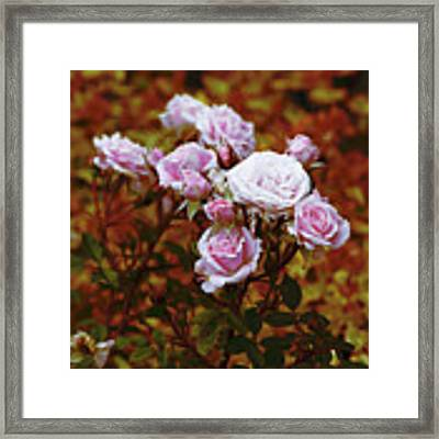 Rusty Romance In Pink Framed Print by Ivana Westin