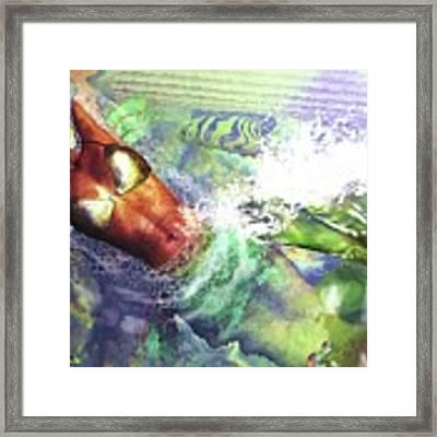 Sea Lioness Framed Print by Baroquen Krafts