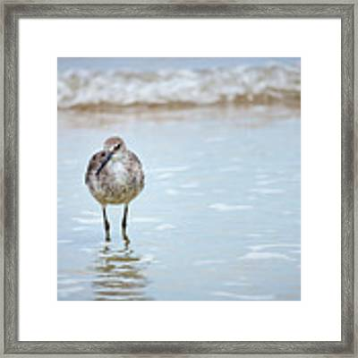 Searching Framed Print by Todd Blanchard