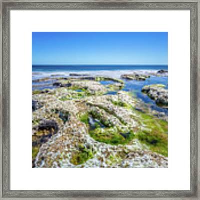 Seaweed And Salt Landscape. Framed Print by Gary Gillette