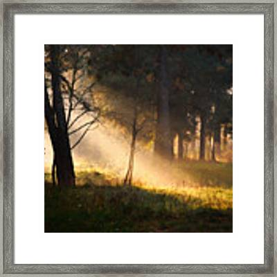 September Impressions Framed Print by Rosario Piazza