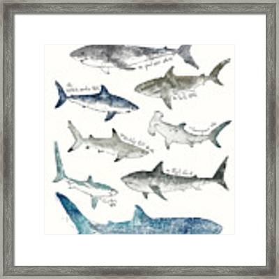 Sharks Framed Print by Amy Hamilton