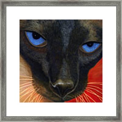 Siamese Framed Print by Karen Zuk Rosenblatt