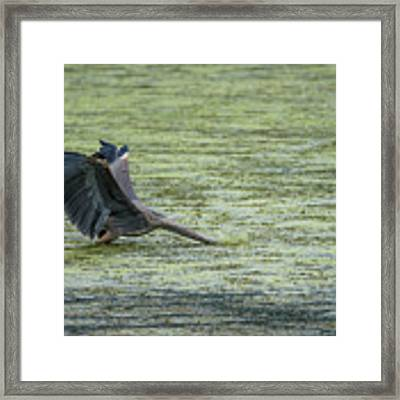 Sometimes You Just Go Head First... Framed Print by Steven Santamour