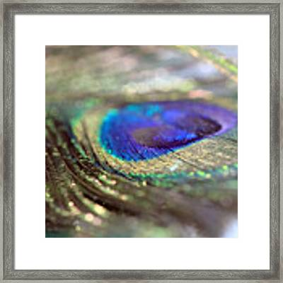 Sparkling Peacock Feather Framed Print by Angela Murdock