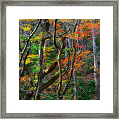 Splash Of Autumn Framed Print by Brad Brizek