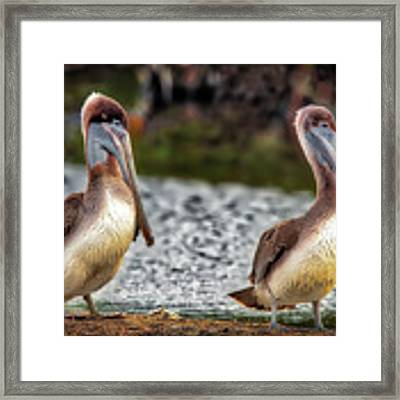 Stan And Ollie Framed Print by David A Lane