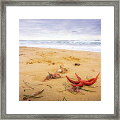 Starfish Framed Print by Gary Gillette