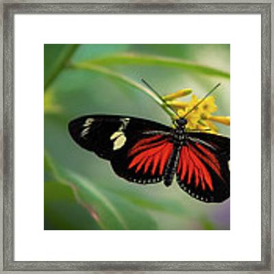 Butterfly, Stop And Smell The Flowers Framed Print by Cindy Lark Hartman