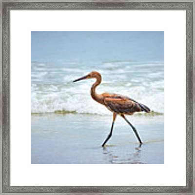 Strolling Framed Print by Todd Blanchard