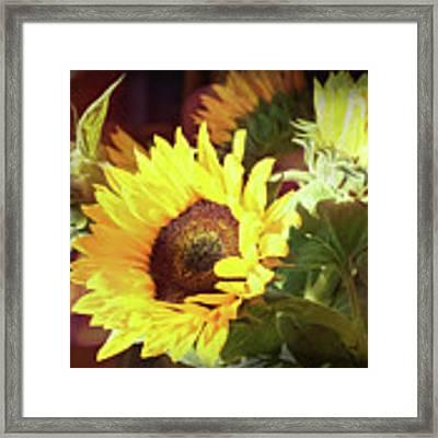 Sun Of The Flower Framed Print by Michael Hope