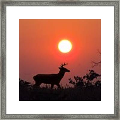 Sunset Silhouette Framed Print by David Dehner