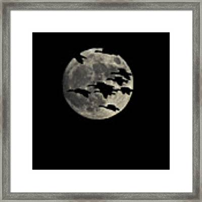 Super Moon Geese Transit Framed Print by William Jobes