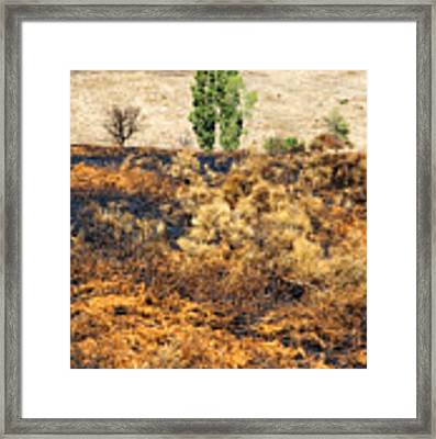 Survivors - After The Fire Framed Print by Silvia Ganora