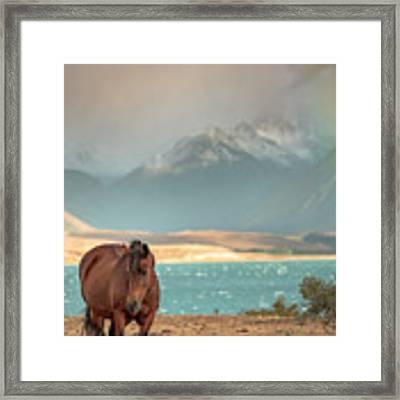 Tekapo Horse Framed Print by Chris Cousins