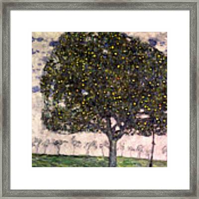 The Apple Tree II Framed Print