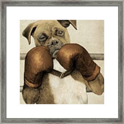 The Boxer Framed Print
