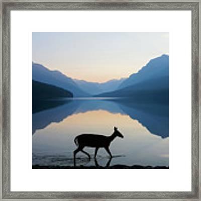 The Grace Of Wild Things Framed Print by Dustin  LeFevre