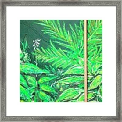 The Green Flower Garden Framed Print by Darren Cannell