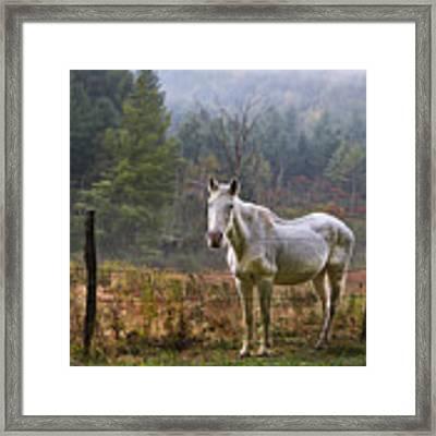 The Olde Gray Horse Framed Print by Ken Barrett