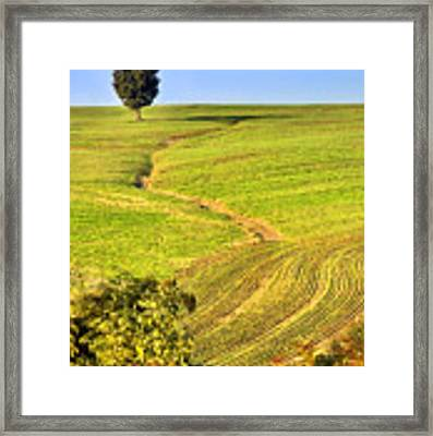 The Tree And The Furrows Framed Print by Silvia Ganora
