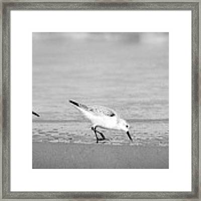 Three Hungry Little Guys Framed Print by T Brian Jones