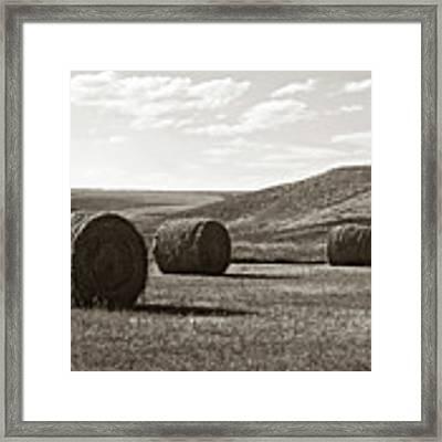 Three Rolls Of Hay Framed Print by Lorraine Devon Wilke