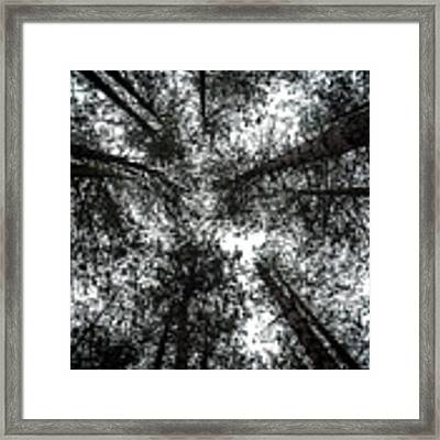 Through The Canopy Framed Print by Nick Bywater
