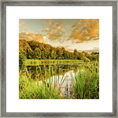 Through The Reeds Framed Print by Nick Bywater