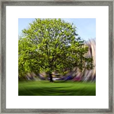 Tree With Animated Surroundings Framed Print by Sascha Meyer