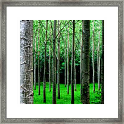 Trees In Rows Framed Print by Julian Perry