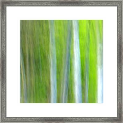 Trees Framed Print by Silke Magino