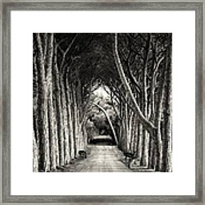 Untitled Framed Print by Sandra