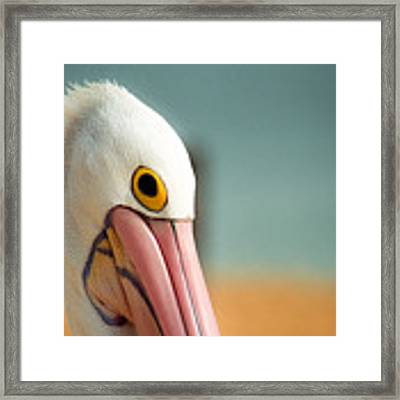 Up Close And Personal With My Pelican Friend Framed Print by T Brian Jones