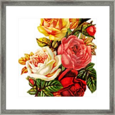 Vintage Rose I Framed Print by Kim Kent