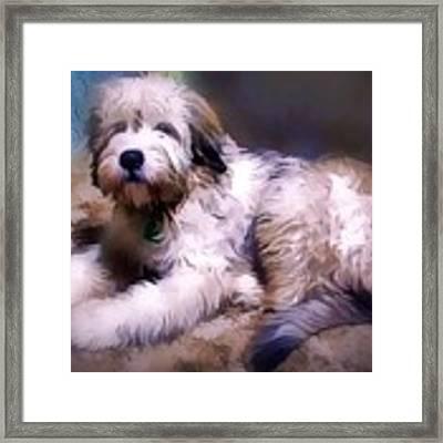 Want A Best Friend Framed Print by Kathy Tarochione