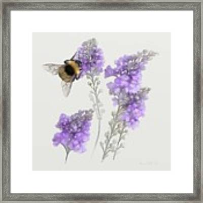 Watercolor Bumble Bee Framed Print by Ivana Westin