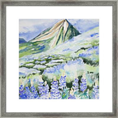 Watercolor - Crested Butte Lupine Landscape Framed Print by Cascade Colors