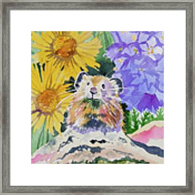 Watercolor - Pika With Wildflowers Framed Print by Cascade Colors