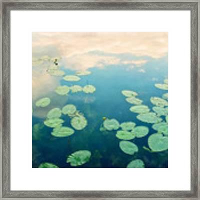 Waterlilies Home Framed Print by Priska Wettstein