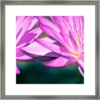 Waterlily Twins Framed Print by Priya Ghose