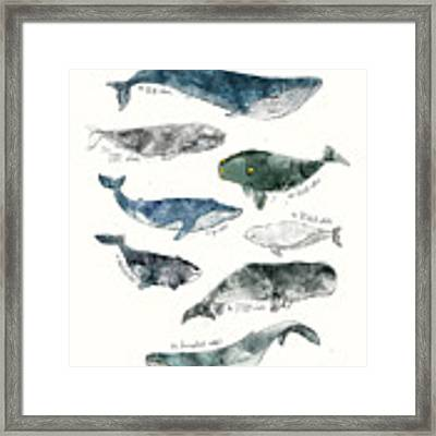 Whales Framed Print by Amy Hamilton