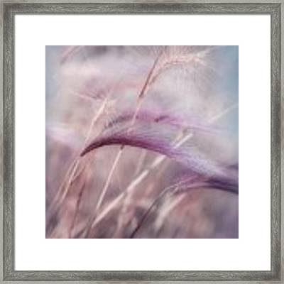 Whispers In The Wind Framed Print