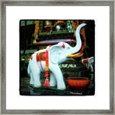 White Elephant. Meaning A Big Expensive Framed Print by Mr Photojimsf
