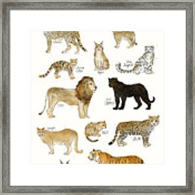 Wild Cats Framed Print by Amy Hamilton