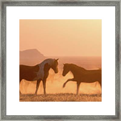 Wild Horse Glow Framed Print by Wesley Aston