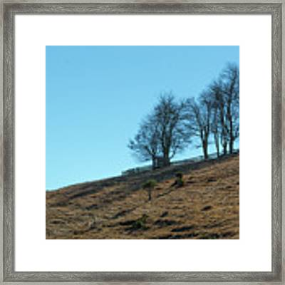 Windswept Trees - December 7 2016 Framed Print by D K Wall