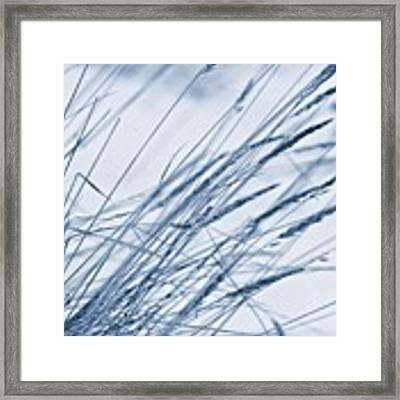 Winter Breeze Framed Print by Priska Wettstein