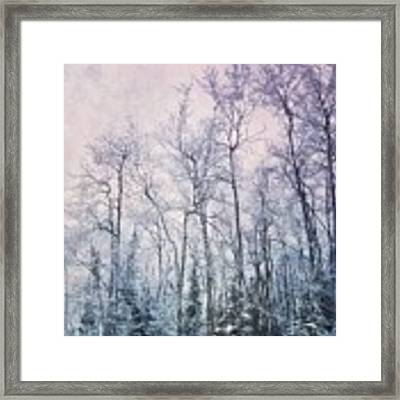 Winter Forest Framed Print